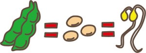 枝豆→大豆