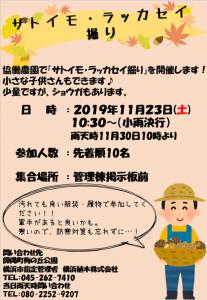 里芋収穫(師岡)